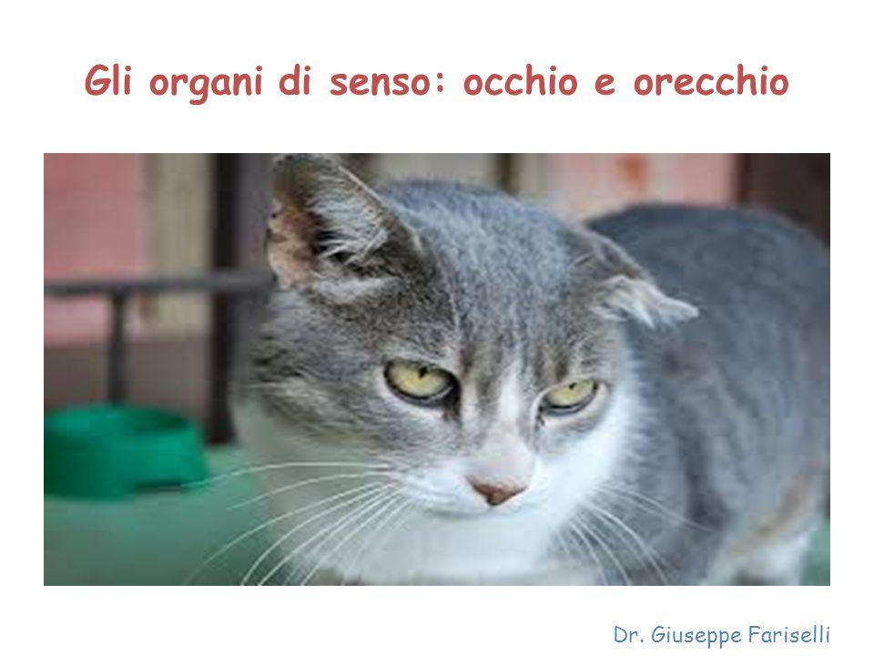 Gli organi di senso: occhio e orecchio Dr. Giuseppe Fariselli