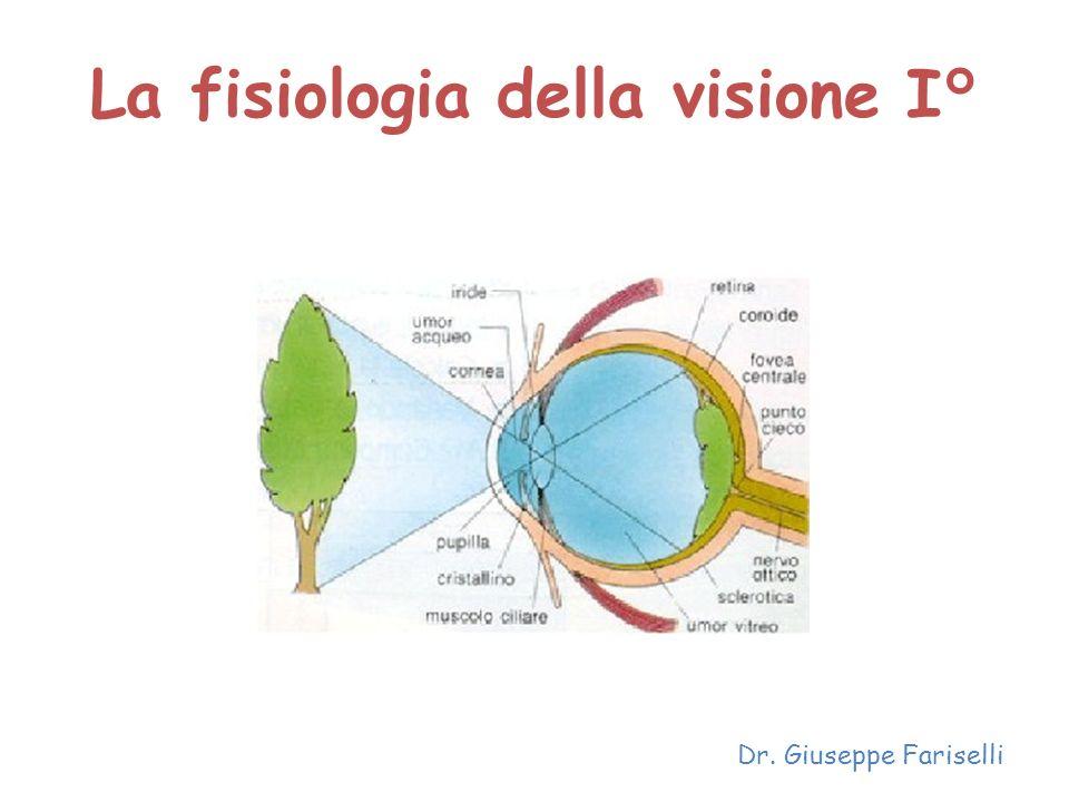 La fisiologia della visione I° Dr. Giuseppe Fariselli