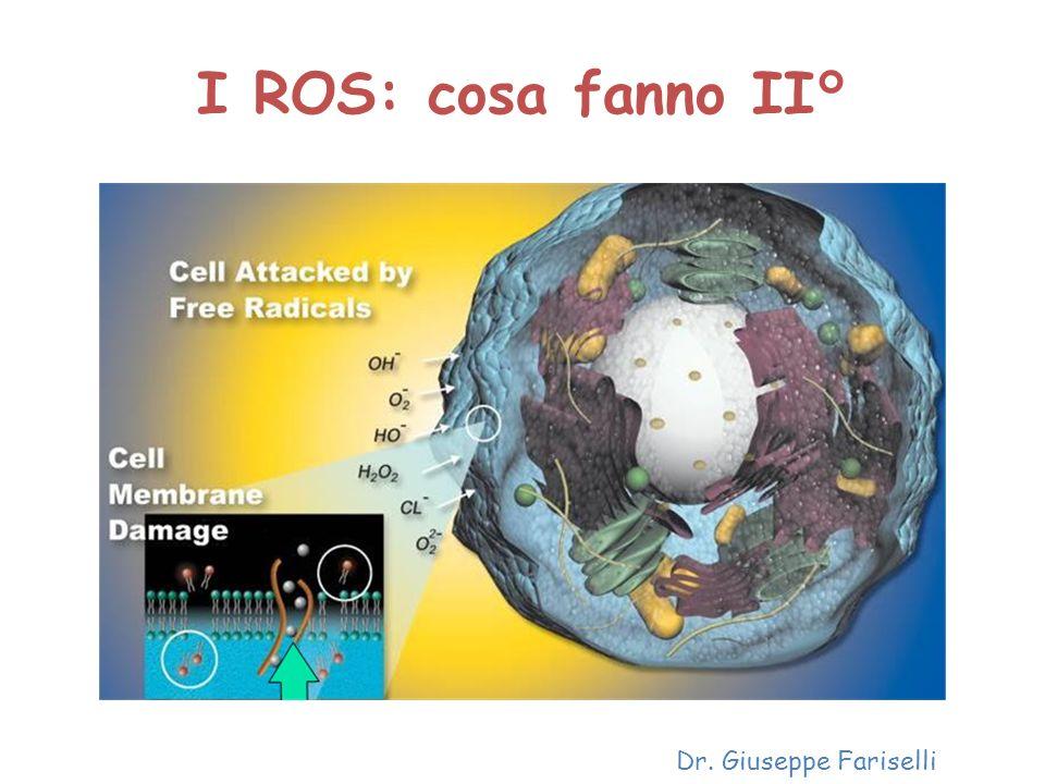 I ROS: cosa fanno II° Dr. Giuseppe Fariselli