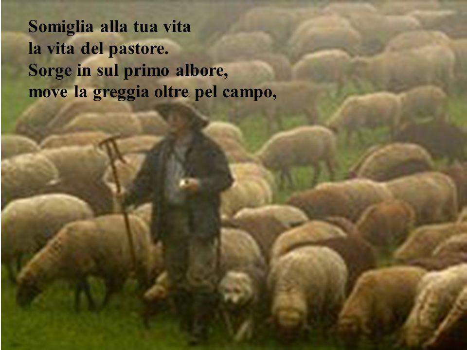 Somiglia alla tua vita la vita del pastore.