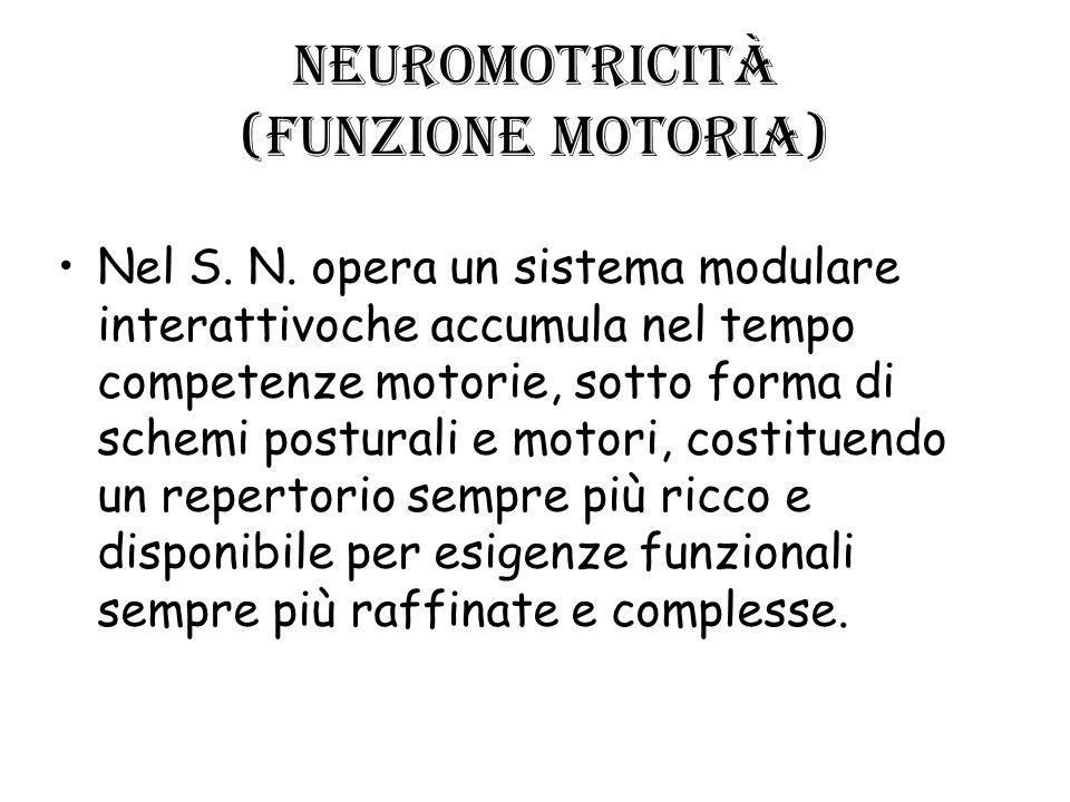 Neuromotricità (funzione motoria) Nel S. N. opera un sistema modulare interattivoche accumula nel tempo competenze motorie, sotto forma di schemi post