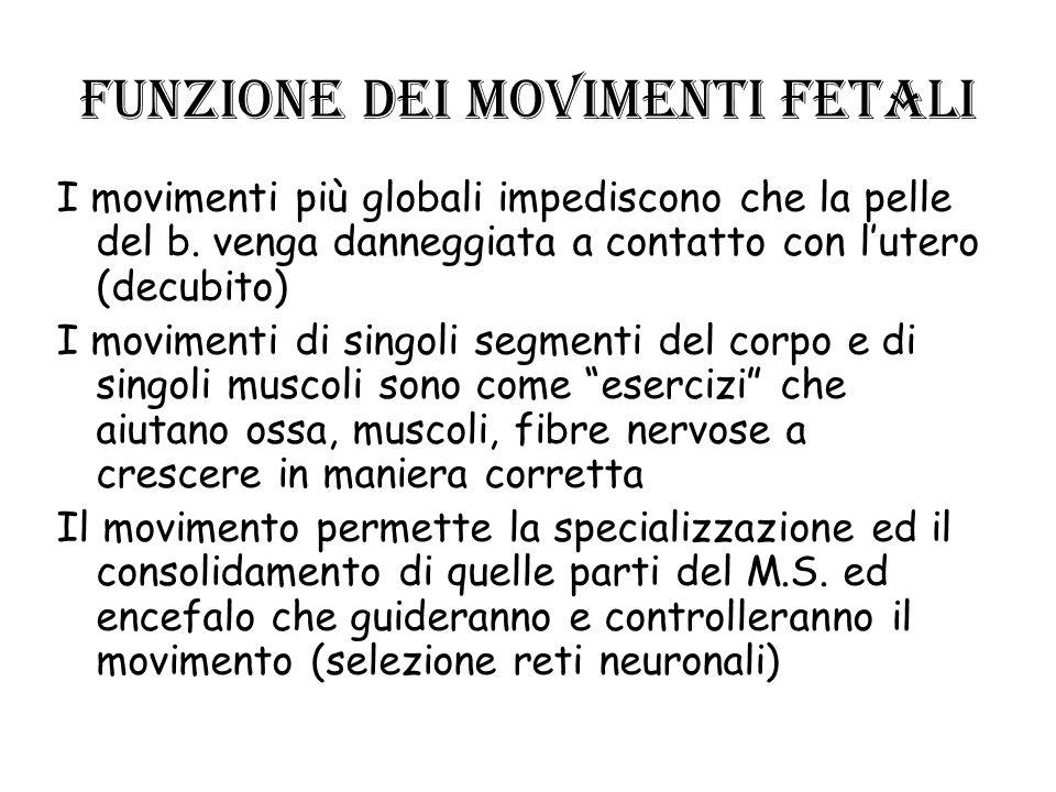 Funzione dei movimenti fetali I movimenti più globali impediscono che la pelle del b. venga danneggiata a contatto con lutero (decubito) I movimenti d