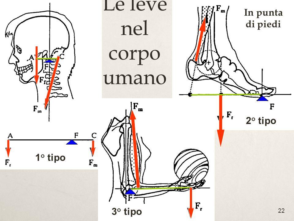 22 Le leve nel corpo umano 1 o tipo 3 o tipo 2 o tipo In punta di piedi