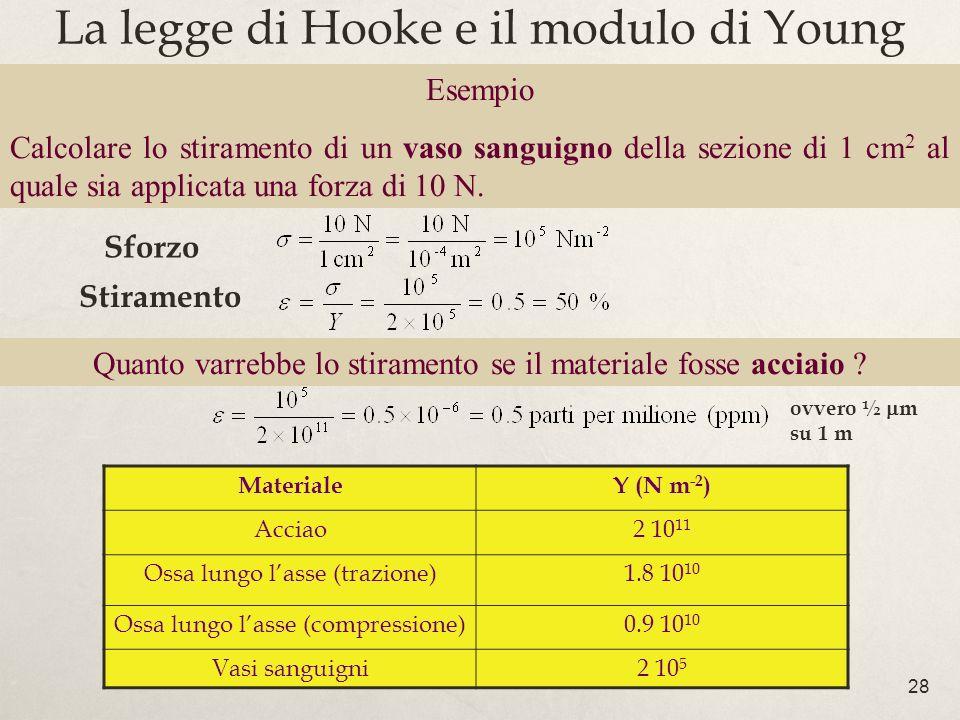 28 La legge di Hooke e il modulo di Young MaterialeY (N m -2 ) Acciao2 10 11 Ossa lungo lasse (trazione)1.8 10 10 Ossa lungo lasse (compressione)0.9 1