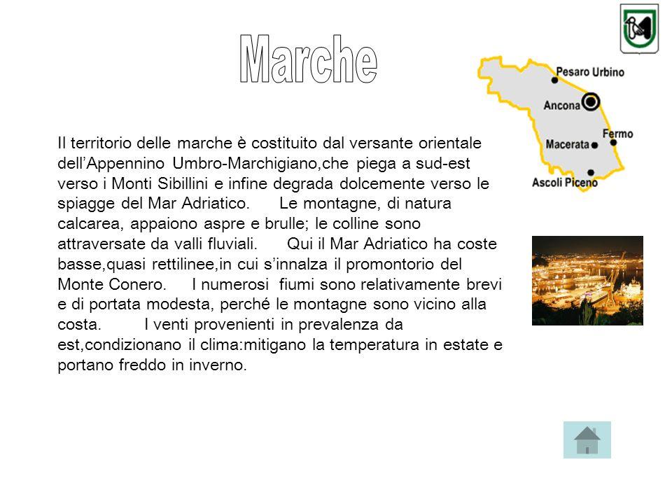 Il territorio delle marche è costituito dal versante orientale dell Appennino Umbro-Marchigiano,che piega a sud-est verso i Monti Sibillini e infine degrada dolcemente verso le spiagge del Mar Adriatico.