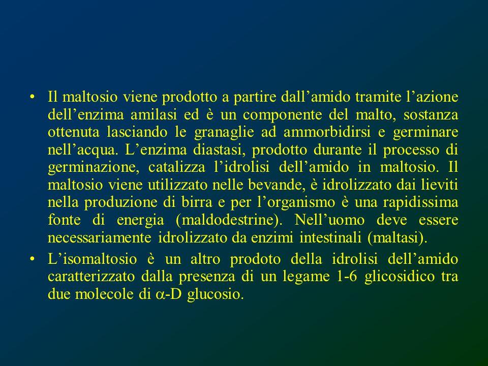 Il maltosio viene prodotto a partire dallamido tramite lazione dellenzima amilasi ed è un componente del malto, sostanza ottenuta lasciando le granagl