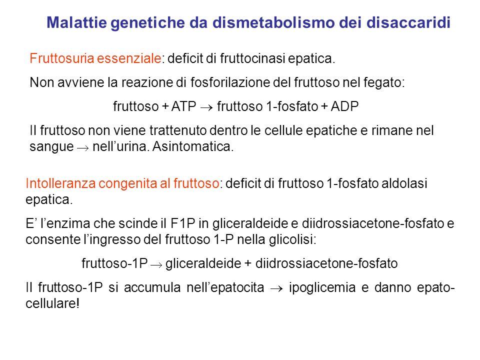 Fruttosuria essenziale: deficit di fruttocinasi epatica. Non avviene la reazione di fosforilazione del fruttoso nel fegato: fruttoso + ATP fruttoso 1-
