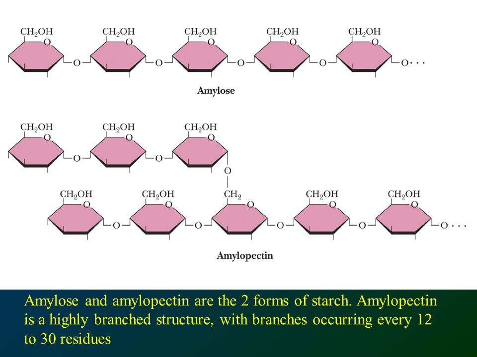 Amylose and amylopectin are the 2 forms of starch.