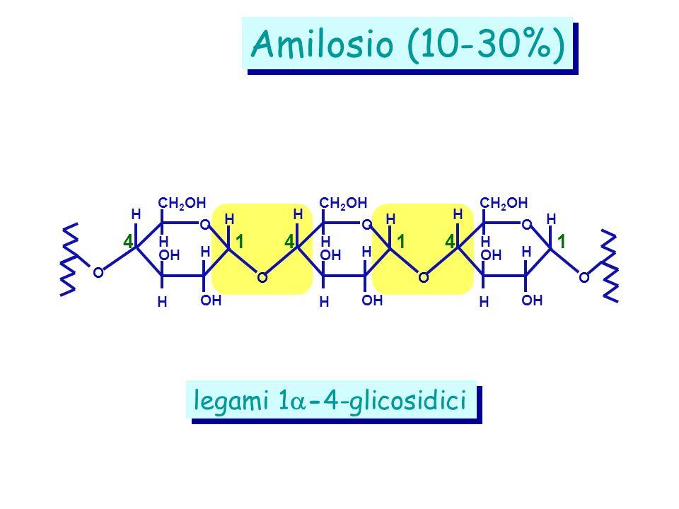 legami 1 -4-glicosidici Amilosio (10-30%) CH 2 OH O OH O O H H H H H 41 CH 2 OH OH O O H H H H H 41 CH 2 OH OH O O H H H H H 41
