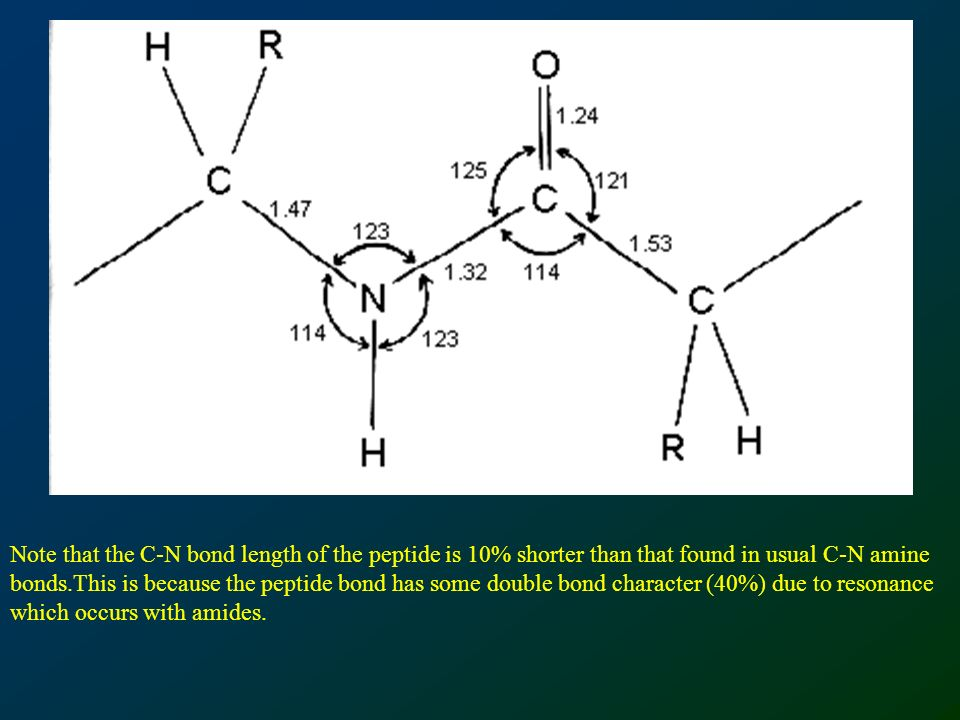 Note that the C-N bond length of the peptide is 10% shorter than that found in usual C-N amine bonds.This is because the peptide bond has some double bond character (40%) due to resonance which occurs with amides.