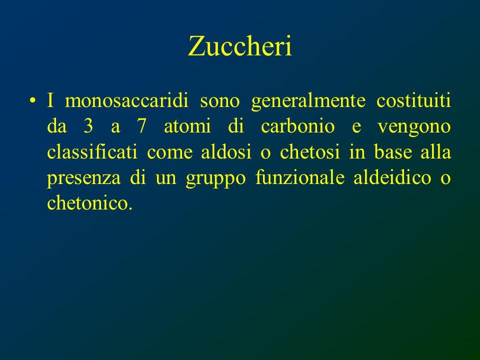 Zuccheri I monosaccaridi sono generalmente costituiti da 3 a 7 atomi di carbonio e vengono classificati come aldosi o chetosi in base alla presenza di