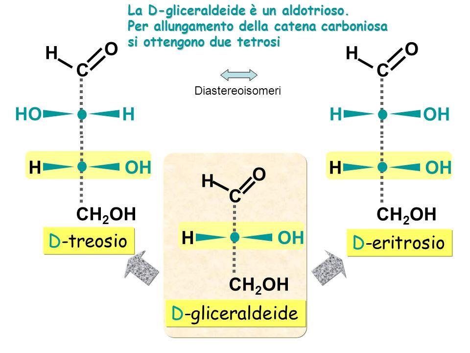 D-eritrosio D-treosio D-gliceraldeide C O H CH 2 OH OH H C O H CH 2 OH OH H C O H H HO C O H CH 2 OH OH H C O H H La D-gliceraldeide è un aldotrioso.