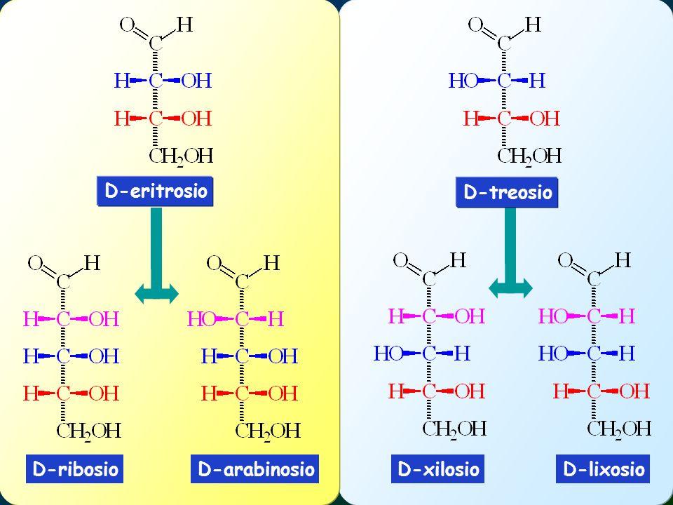 D-ribosioD-arabinosioD-lixosioD-xilosio D-eritrosio D-treosio