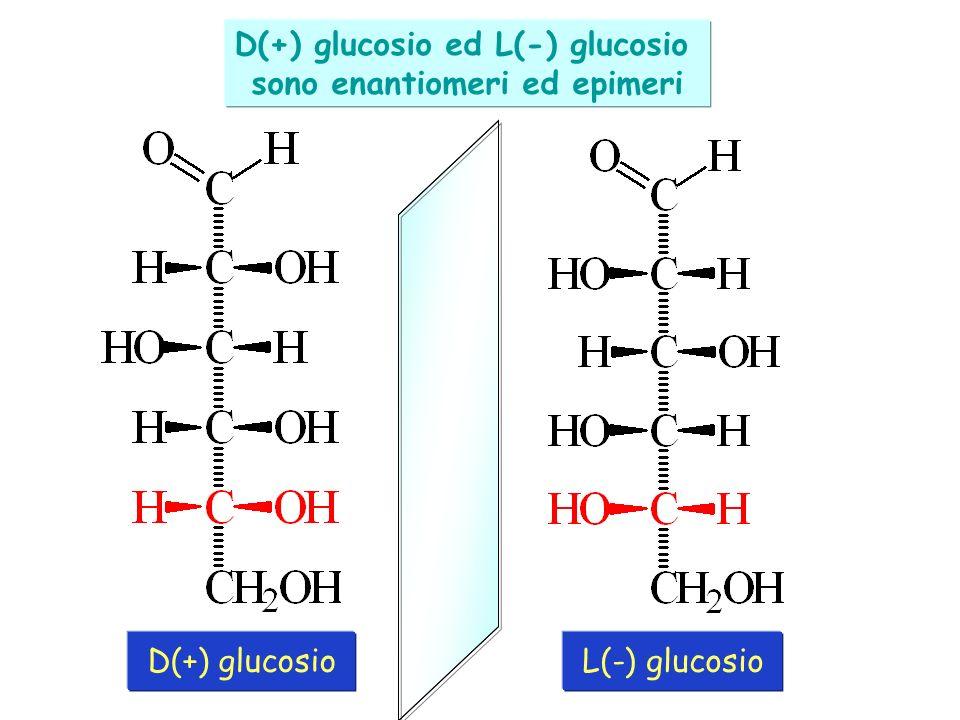 D(+) glucosio ed L(-) glucosio sono enantiomeri ed epimeri D(+) glucosioL(-) glucosio