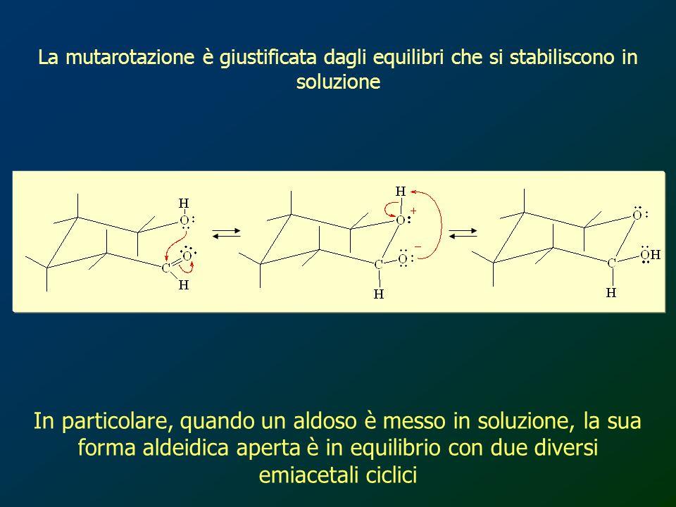 In particolare, quando un aldoso è messo in soluzione, la sua forma aldeidica aperta è in equilibrio con due diversi emiacetali ciclici La mutarotazio