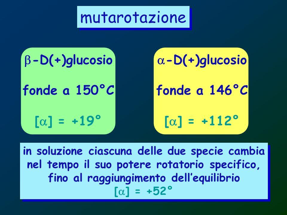 mutarotazione -D(+)glucosio fonde a 150°C [ ] = +19° -D(+)glucosio fonde a 146°C [ ] = +112° in soluzione ciascuna delle due specie cambia nel tempo i