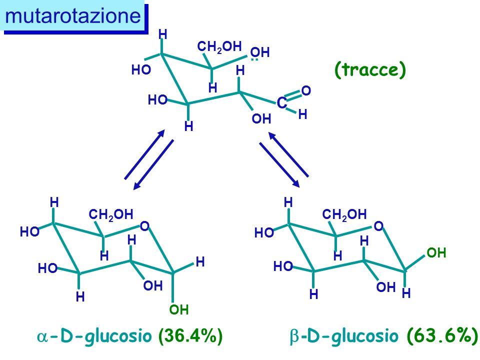 CH 2 OH HO H H H H OH C O H.. CH 2 OH HO H H H H OH O CH 2 OH HO H H H H O OH H -D-glucosio (36.4%) OH H - D-glucosio (63.6%) OH mutarotazione (tracce