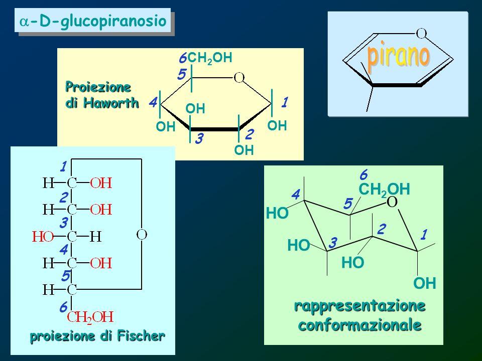 rappresentazioneconformazionale O OH HO CH 2 OH -D-glucopiranosio Proiezione di Haworth OH CH 2 OH proiezione di Fischer 1 1 1 2 2 2 3 3 3 4 4 4 5 5 5