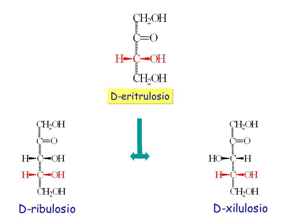 D-ribulosio D-xilulosio D-eritrulosio
