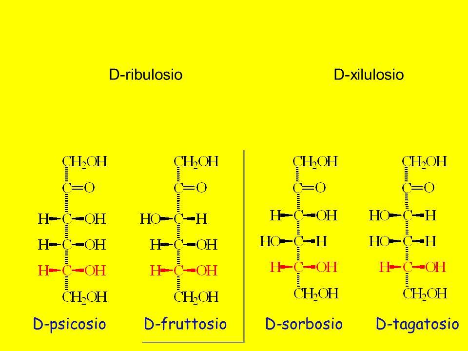 D-psicosioD-fruttosioD-sorbosioD-tagatosio D-ribulosioD-xilulosio