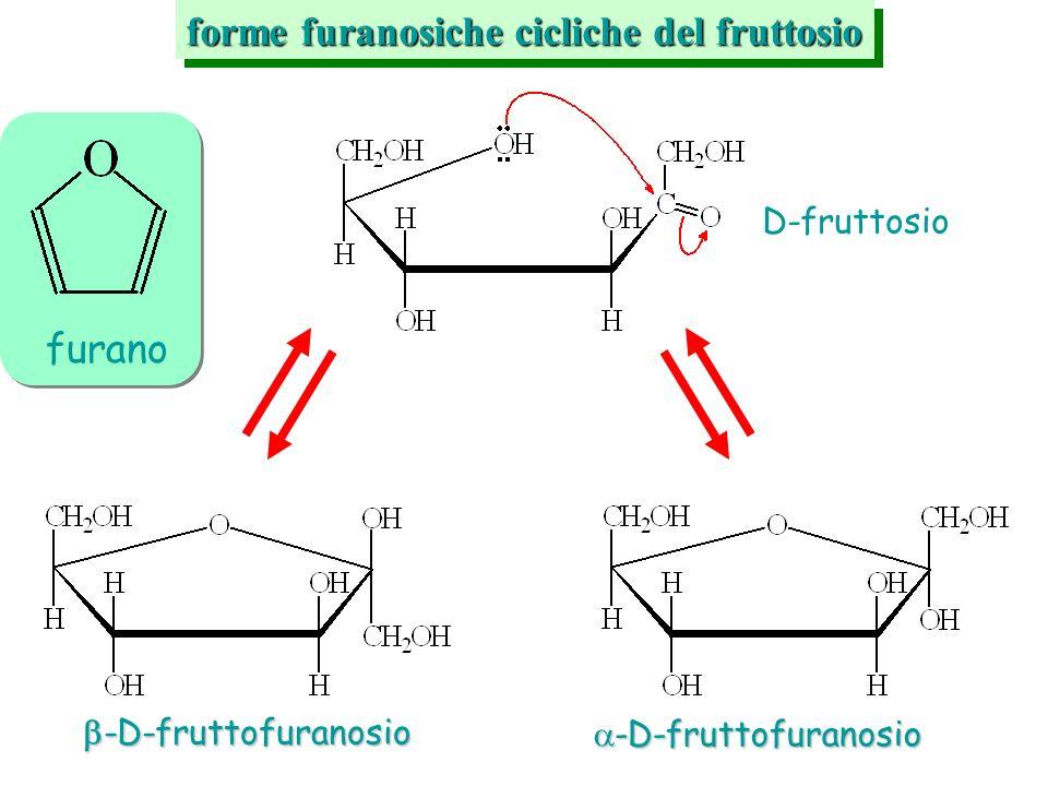 furano forme furanosiche cicliche del fruttosio D-fruttosio -D-fruttofuranosio -D-fruttofuranosio