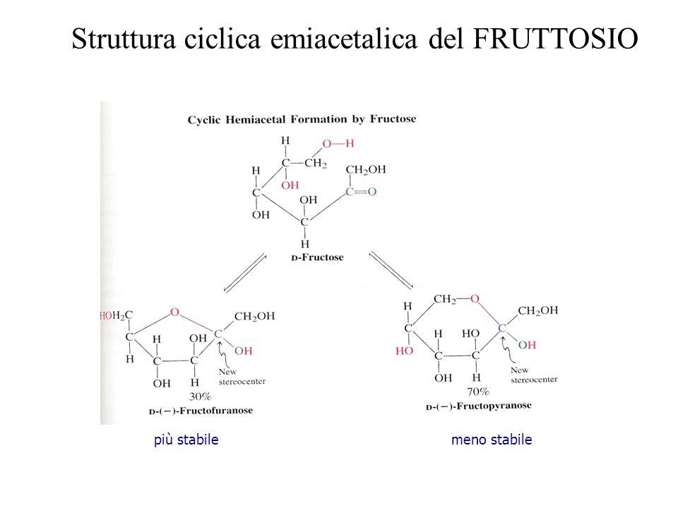 Struttura ciclica emiacetalica del FRUTTOSIO meno stabilepiù stabile