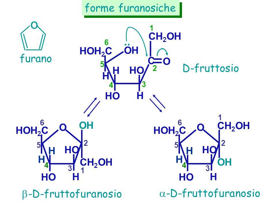 HO H HOH 2 C HO OH.. 3 4 5 6 H furano forme furanosiche D-fruttosio -D-fruttofuranosio H CH 2 OH C O 1 2 o HO H OH HOH 2 C HO O 1 2 3 4 5 6 H H CH 2 O