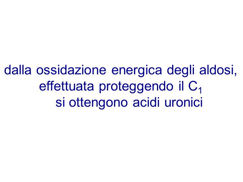 dalla ossidazione energica degli aldosi, effettuata proteggendo il C 1 si ottengono acidi uronici