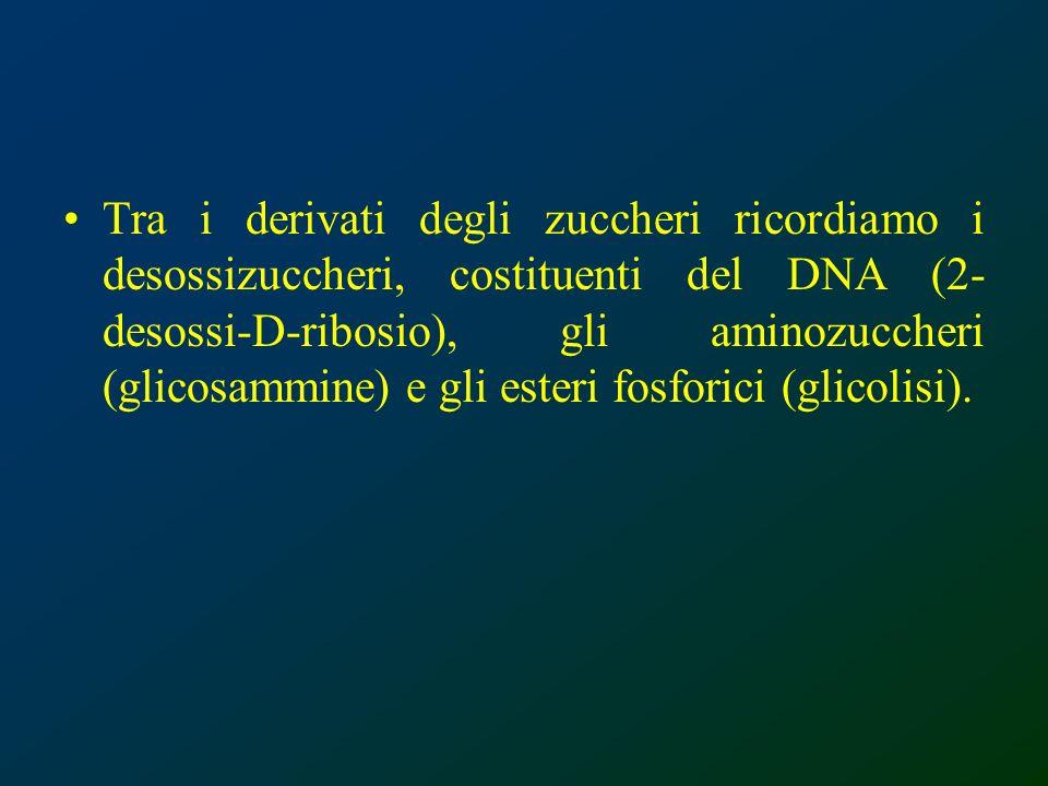 Tra i derivati degli zuccheri ricordiamo i desossizuccheri, costituenti del DNA (2- desossi-D-ribosio), gli aminozuccheri (glicosammine) e gli esteri