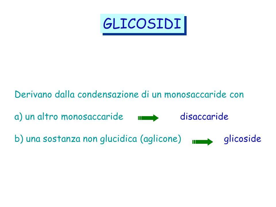 Derivano dalla condensazione di un monosaccaride con a) un altro monosaccaride disaccaride b) una sostanza non glucidica (aglicone) glicoside GLICOSID