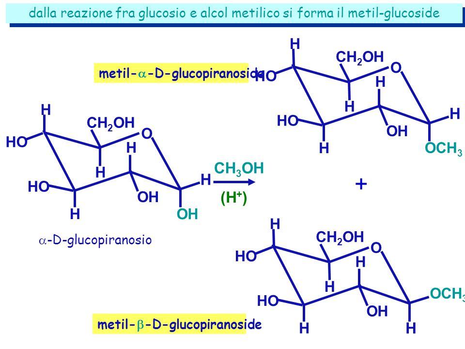 dalla reazione fra glucosio e alcol metilico si forma il metil-glucoside CH 3 OH (H + ) -D-glucopiranosio metil- -D-glucopiranoside H CH 2 OH HO H H H