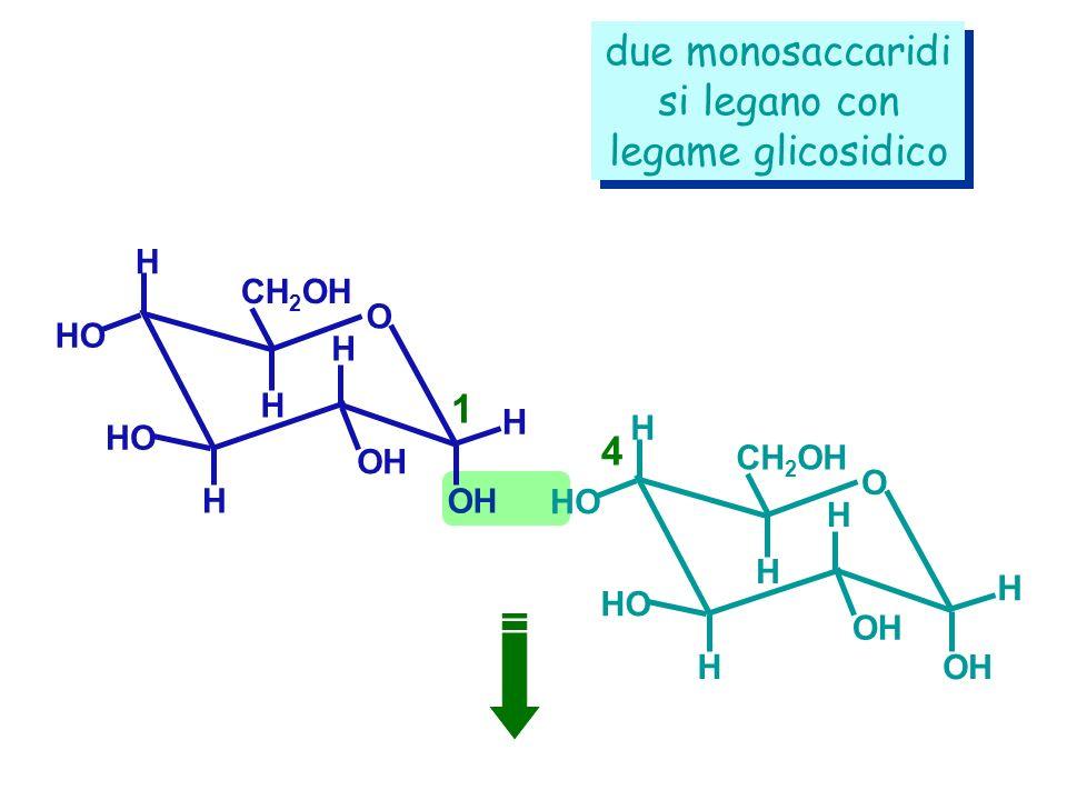 H CH 2 OH HO H H H H OH O H CH 2 OH HO H H H H OH O due monosaccaridi si legano con legame glicosidico due monosaccaridi si legano con legame glicosid