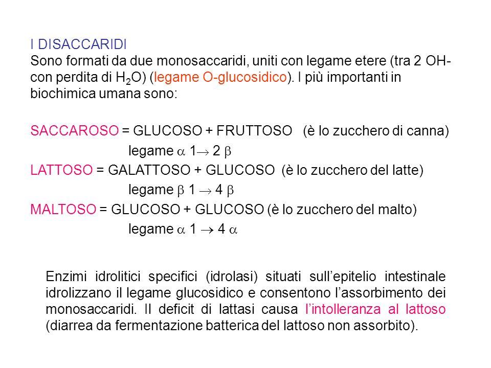 I DISACCARIDI Sono formati da due monosaccaridi, uniti con legame etere (tra 2 OH- con perdita di H 2 O) (legame O-glucosidico). I più importanti in b