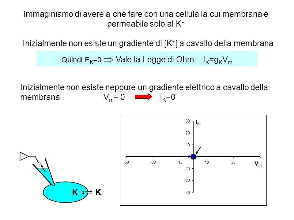 I K =g K V m Vale la Legge di Ohm Non esistono gradienti di [K + ] né elettrico a cavallo della membrana -30 -20 -10 0 10 20 30 -50-30-101030 VmVm IKIK V m < 0 - KK I K <0 KK Inizialmente: Successivamente vengono iniettate cariche (-) nella cellula