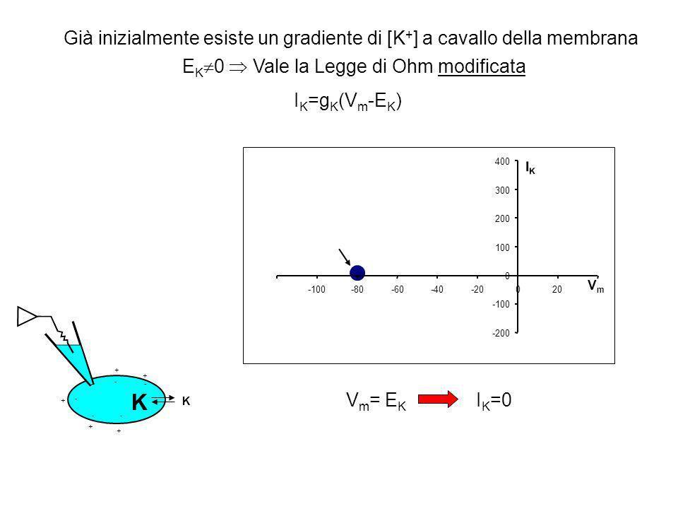 -200 -100 0 100 200 300 400 -100-80-60-40-20020 VmVm IKIK I K =g K (V m -E K ) + + + + + + -- - - - - Esiste un gradiente di [K + ] a cavallo della membrana Vale la Legge di Ohm modificata K K Vm<EKVm<EK - I K <0 Successivamente vengono iniettate cariche (-) nella cellula + + + + + + -- - - - - K K -