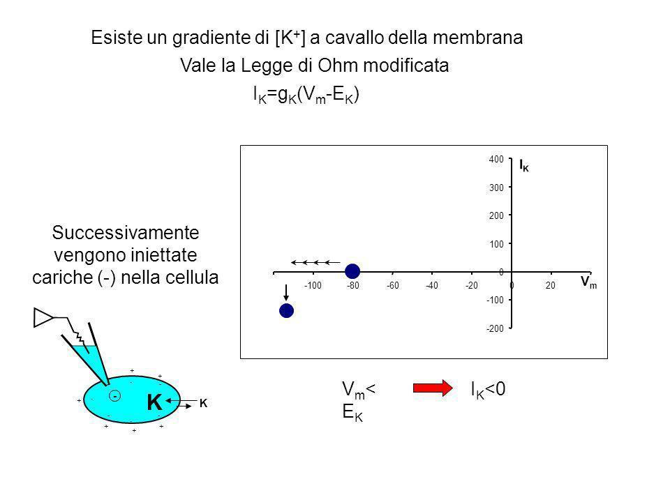 -200 -100 0 100 200 300 400 -100-80-60-40-20020 VmVm IKIK I K =g K (V m -E K ) + + + + + + -- - - - - Esiste un gradiente di [K + ] a cavallo della membrana Vale la Legge di Ohm modificata K K Vm>EKVm>EK + I K >0 Successivamente vengono iniettate cariche (+) nella cellula + + + + + + -- - - - - K K +