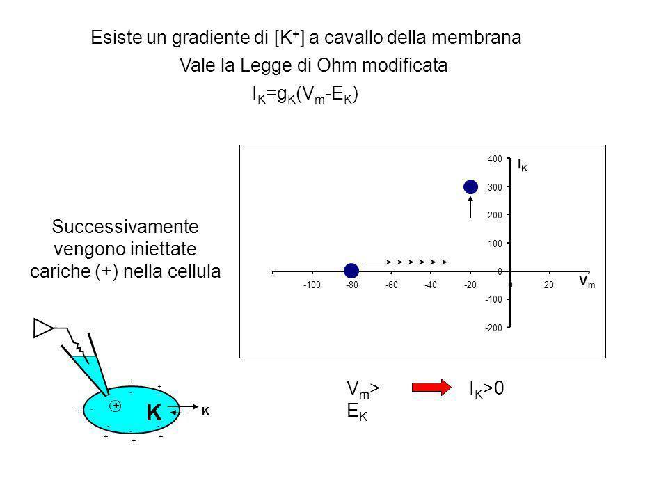I K =g K (V m -E K ) -200 -100 0 100 200 300 400 -100-80-60-40-20020 VmVm IKIK Esiste un gradiente di [K + ] a cavallo della membrana Vale la Legge di Ohm modificata Cioè, se la cellula non è stimolata elettricamente I K =0.