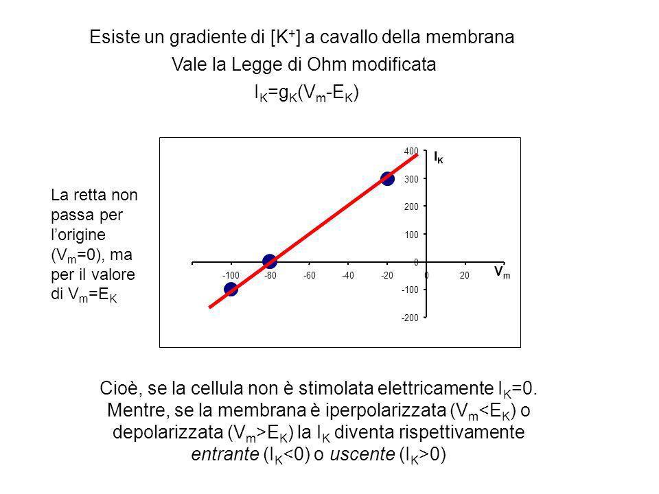 I K =g K (V m -E K ) -200 -100 0 100 200 300 400 -100-80-60-40-20020 VmVm IKIK Esiste un gradiente di [K + ] a cavallo della membrana Vale la Legge di