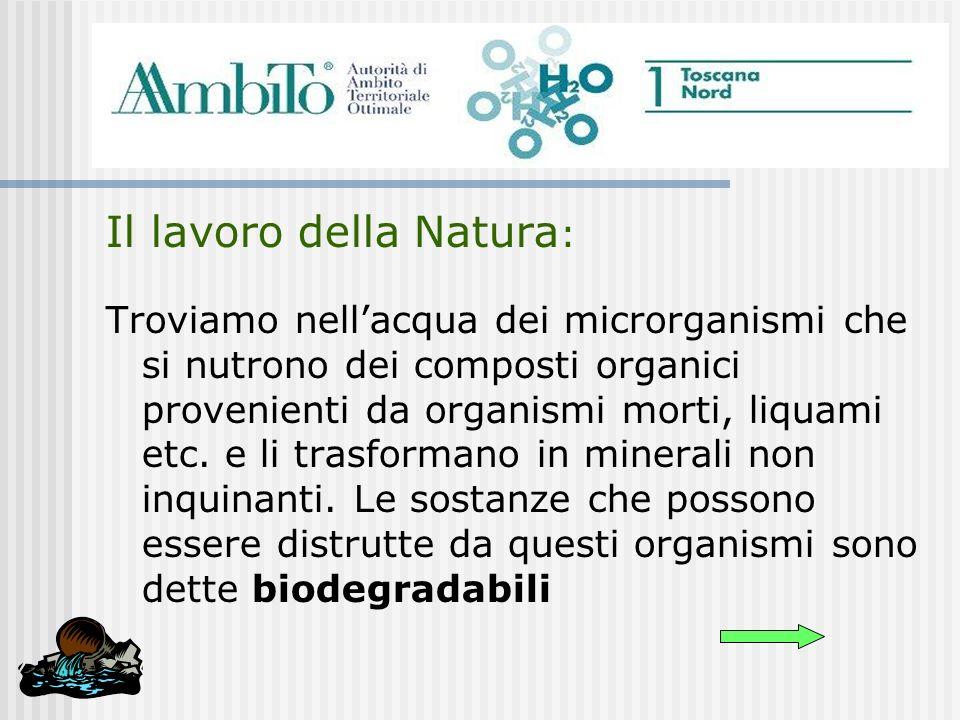 Il lavoro della Natura : Troviamo nellacqua dei microrganismi che si nutrono dei composti organici provenienti da organismi morti, liquami etc. e li t
