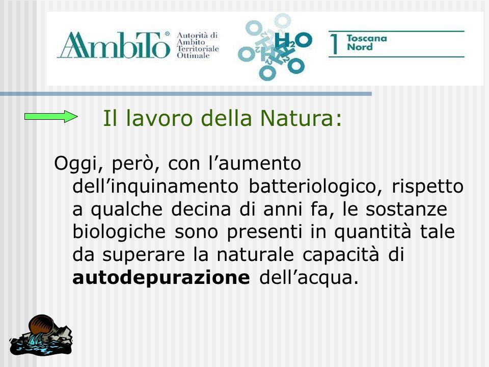 Il lavoro della Natura: Oggi, però, con laumento dellinquinamento batteriologico, rispetto a qualche decina di anni fa, le sostanze biologiche sono pr