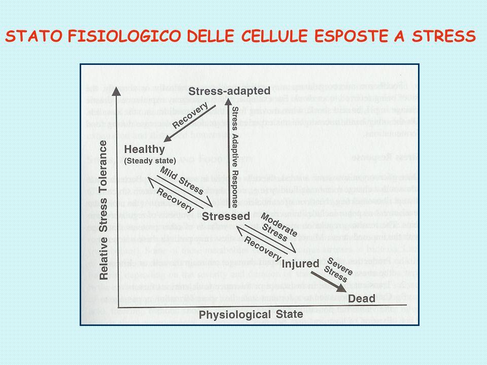 STATO FISIOLOGICO DELLE CELLULE ESPOSTE A STRESS
