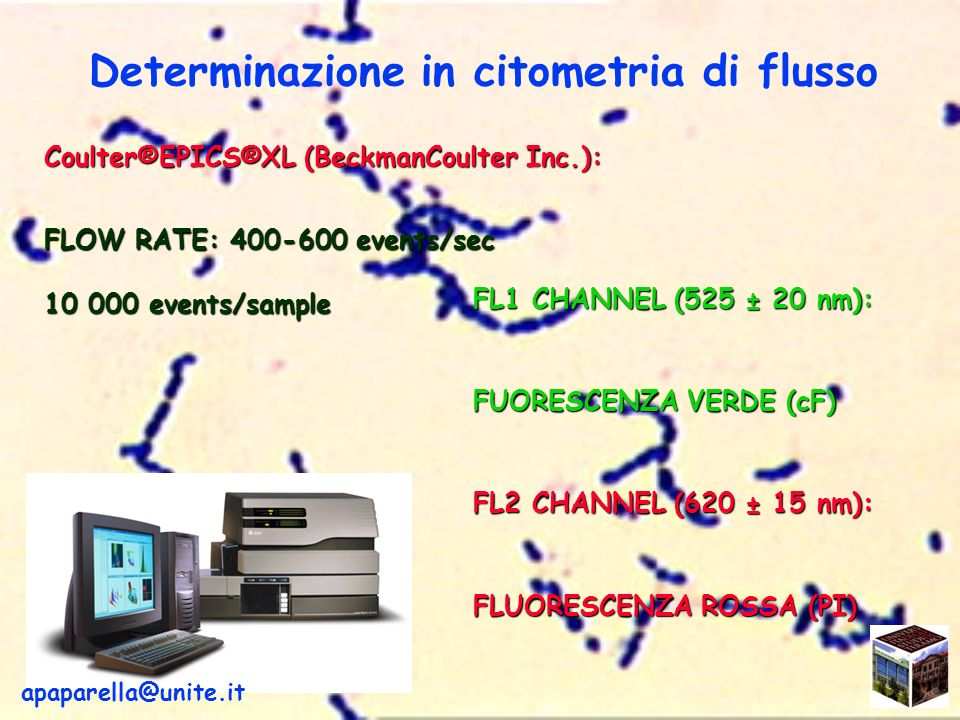 Determinazione in citometria di flusso Coulter®EPICS®XL (BeckmanCoulter Inc.): FLOW RATE: 400-600 events/sec 10 000 events/sample FL1 CHANNEL (525 ± 20 nm): FUORESCENZA VERDE (cF) FL2 CHANNEL (620 ± 15 nm): FLUORESCENZA ROSSA (PI) apaparella@unite.it