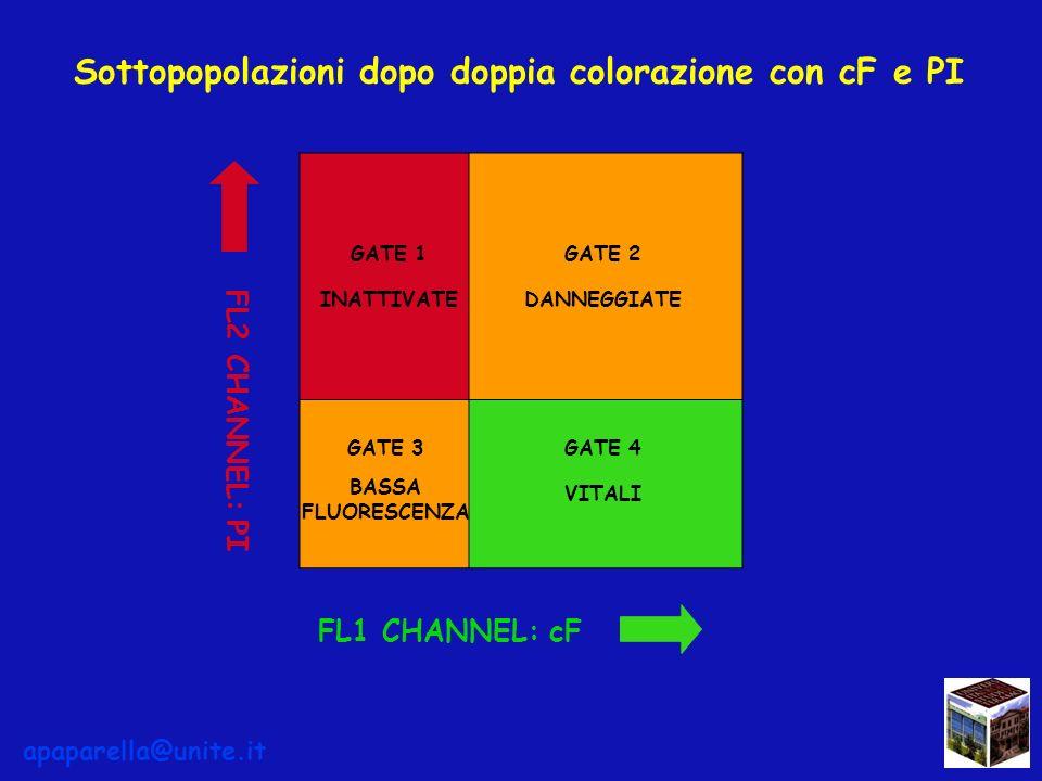 Sottopopolazioni dopo doppia colorazione con cF e PI GATE 4 VITALI GATE 2 DANNEGGIATE GATE 1 INATTIVATE GATE 3 BASSA FLUORESCENZA FL1 CHANNEL: cF FL2 CHANNEL: PI apaparella@unite.it