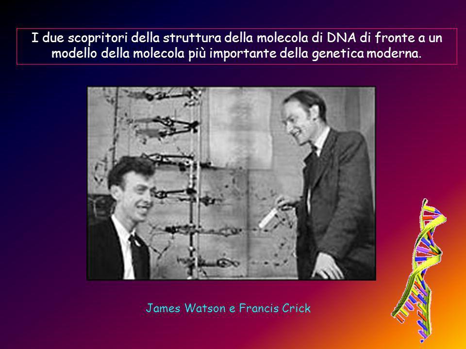 I due scopritori della struttura della molecola di DNA di fronte a un modello della molecola più importante della genetica moderna.