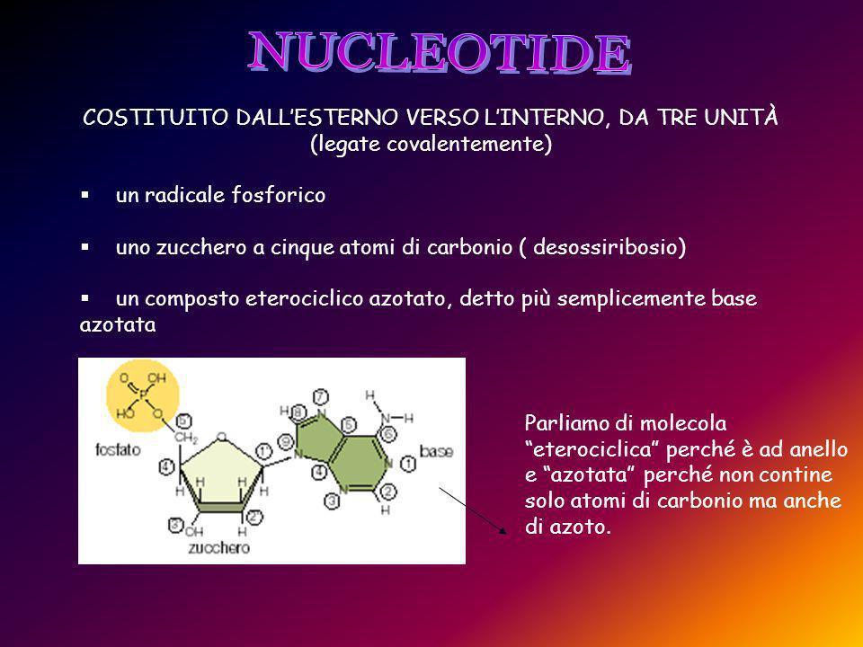 COSTITUITO DALLESTERNO VERSO LINTERNO, DA TRE UNITÀ (legate covalentemente) un radicale fosforico uno zucchero a cinque atomi di carbonio ( desossiribosio) un composto eterociclico azotato, detto più semplicemente base azotata Parliamo di molecola eterociclica perché è ad anello e azotata perché non contine solo atomi di carbonio ma anche di azoto.