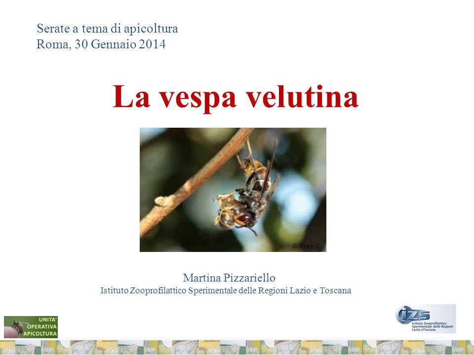 Serate a tema di apicoltura Roma, 30 Gennaio 2014 La vespa velutina Martina Pizzariello Istituto Zooprofilattico Sperimentale delle Regioni Lazio e Toscana