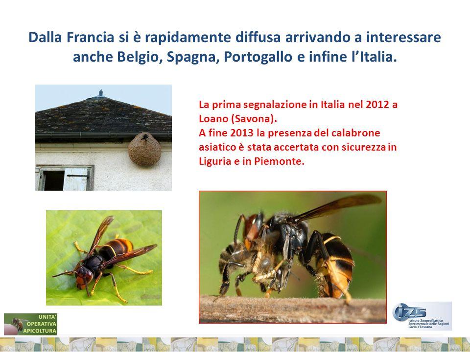 Dalla Francia si è rapidamente diffusa arrivando a interessare anche Belgio, Spagna, Portogallo e infine lItalia.