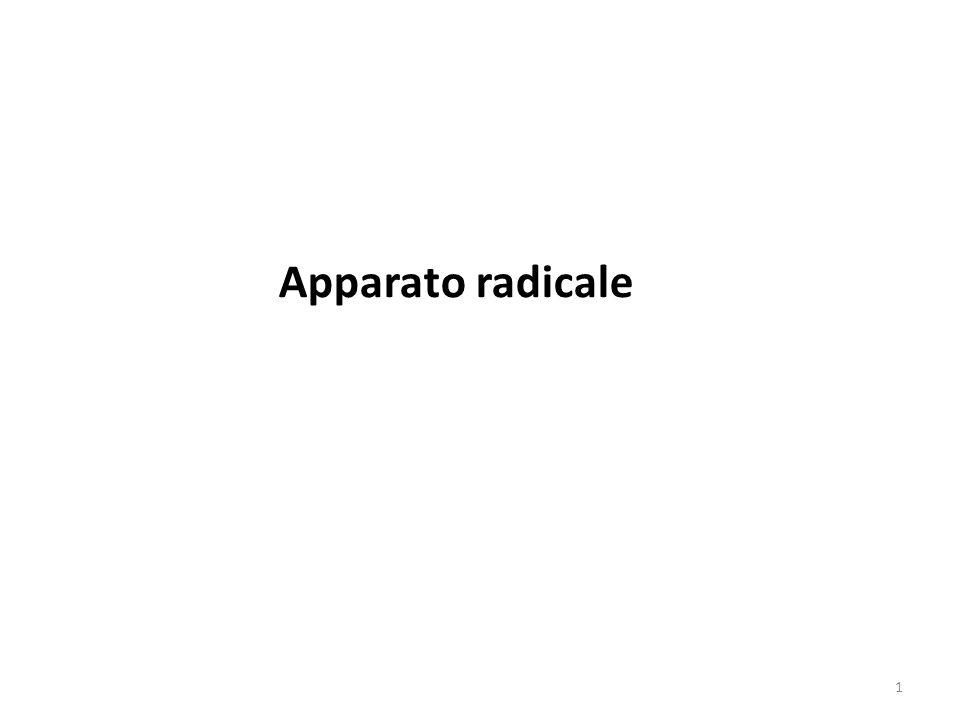 42 Struttura della stele (con 1 solo fascio) di Dicotiledone Endodermide Periciclo Arca floematica Arca xilematica