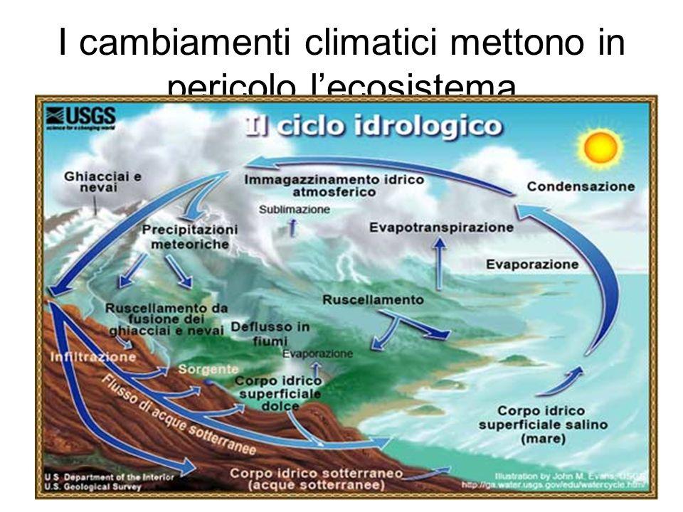 I cambiamenti climatici mettono in pericolo lecosistema