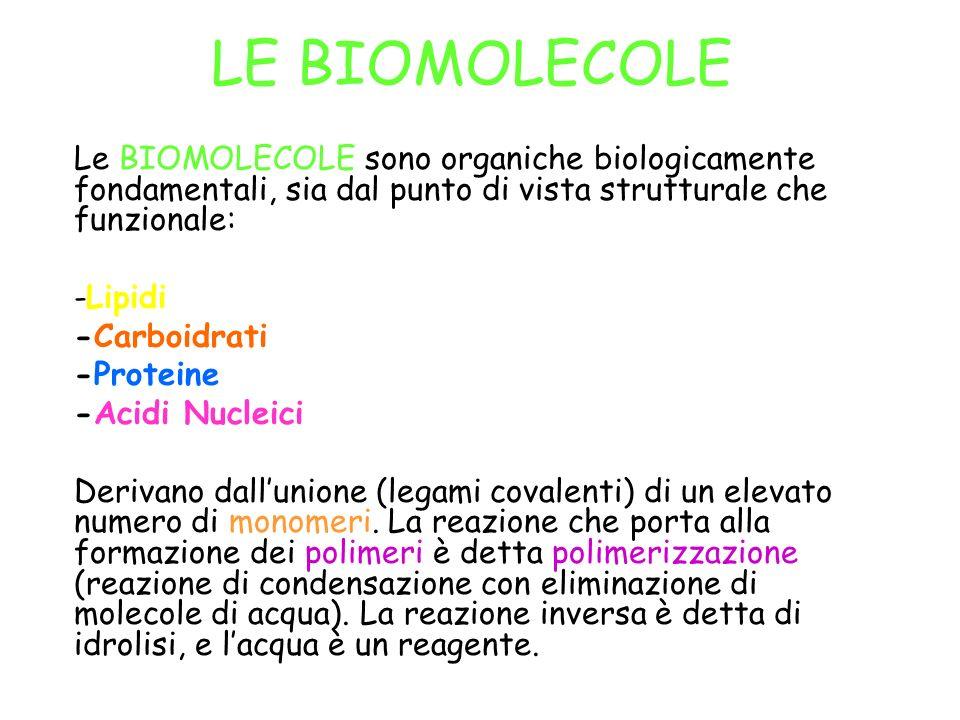 LE BIOMOLECOLE Le BIOMOLECOLE sono organiche biologicamente fondamentali, sia dal punto di vista strutturale che funzionale: -Lipidi -Carboidrati -Pro